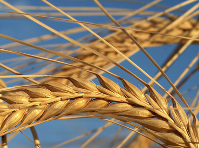 Celiac Disease: A 4-Step Treatment Program
